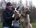 Welsh corgi cardigan puppy Zhacardi AELITA with her owners